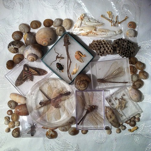 BONELUST ART & JEWELRY NATURAL SUPPLIES: Just now sorting these natural supplies that were a bday gifts. Insects, mummified frogs, bones, crab pinchers, snail shells & wasp nests. All ethically sourced & found by chance over many years. Already have plans