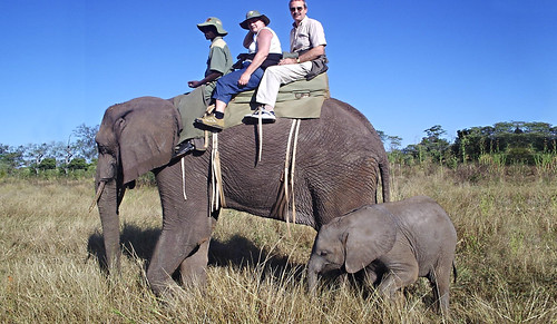 Elephant Ride 2 by Joan - BlogBizBuzz
