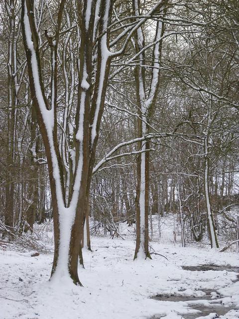 Trees near the entrance