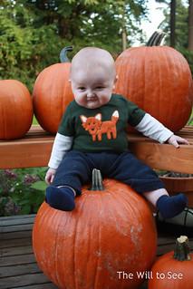 Will pumpkins
