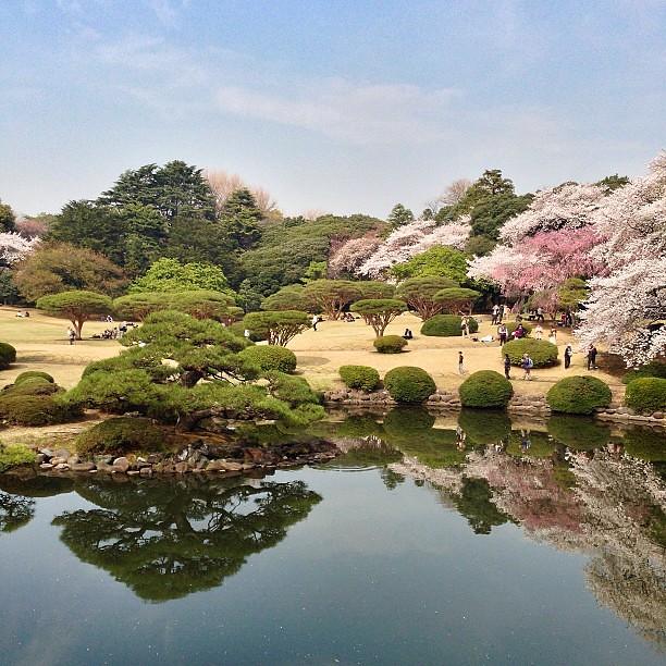 Shinjuku Gyoen National Garden #shinjuku #tokyo #japan #nature #landscape #in...