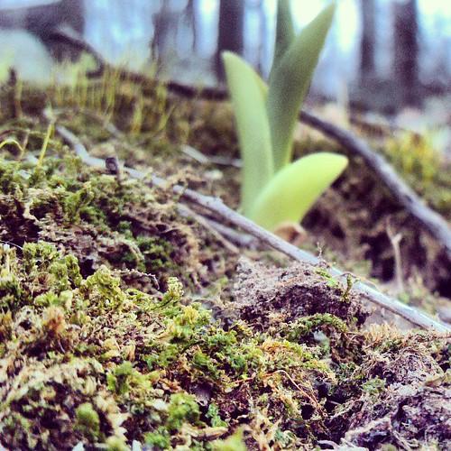 Springing.
