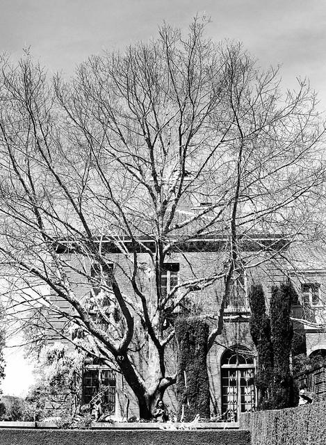 Filoli House