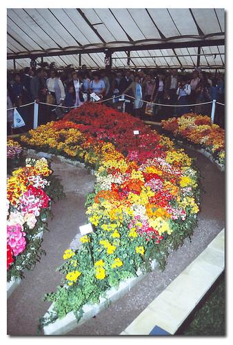 Flower Borders. 1982 RHS Chelsea Flower Show London
