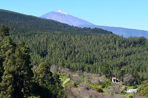 Pines and Teide, La Orotava Valley, Tenerife
