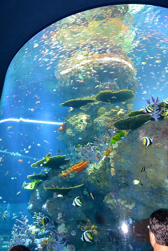 @S.E.A. Aquarium