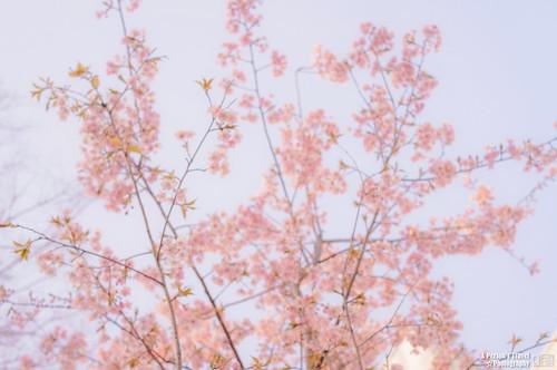 2013_Tokyo_Japan_Chap11_11