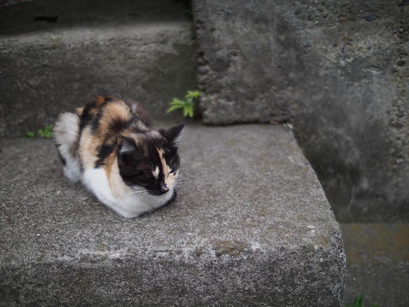 A Cat in Tokyo