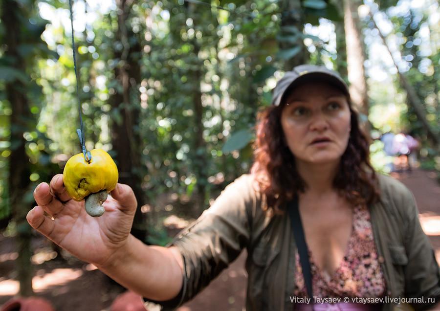 Guid showing cashewnut