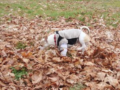 Prancing through the leaves