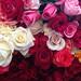 Roses at Etla por Hanoi Mark