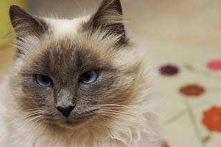 gatto+1