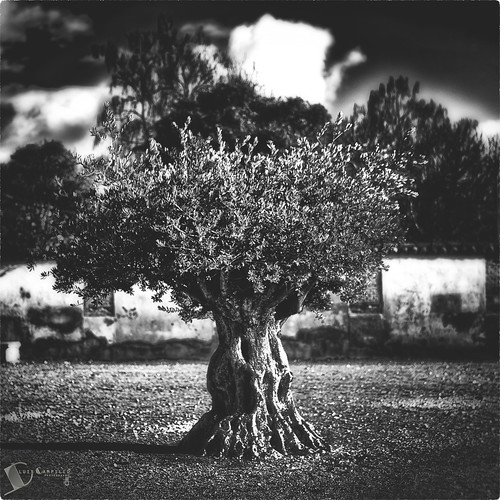 Raw tree
