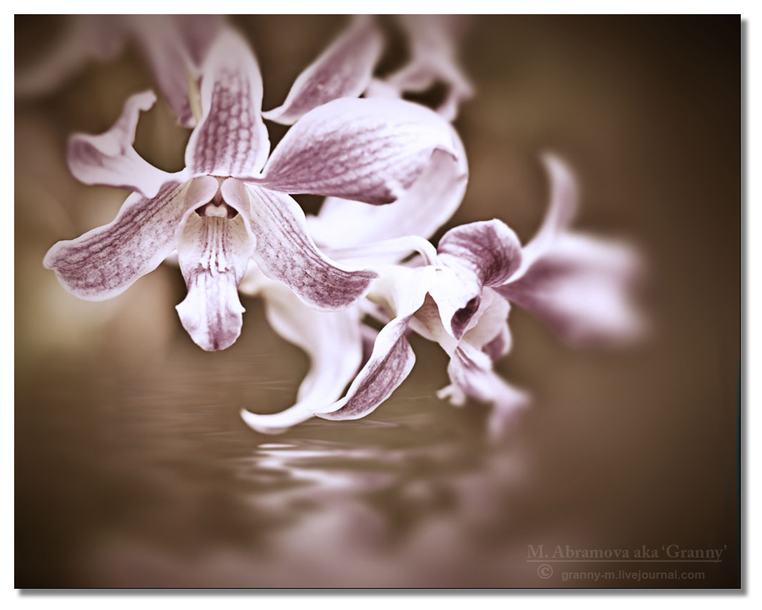 Orchid   2011_3_4_1974c