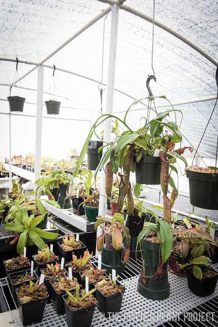 Nepenthes Dome