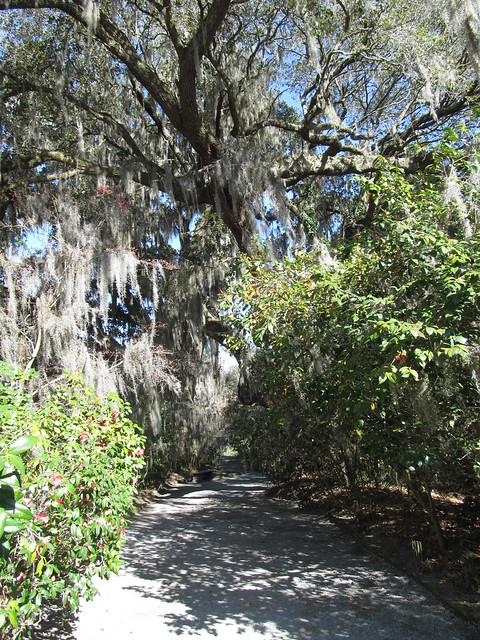 Magnolia Plantation And Gardens Charleston South Caroli Flickr Photo Sharing