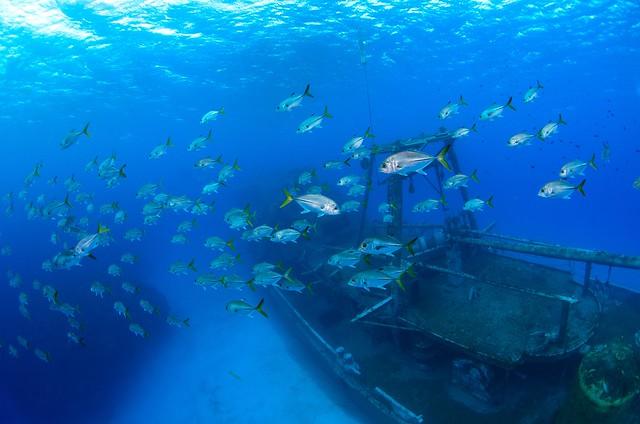 Kittiwake-Cayman-Diving 621