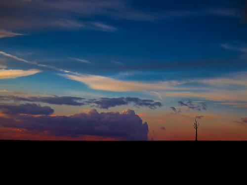 [フリー画像素材] 自然風景, 空, 雲, 朝焼け・夕焼け, 樹木, 風景 - イギリス ID:201303242000