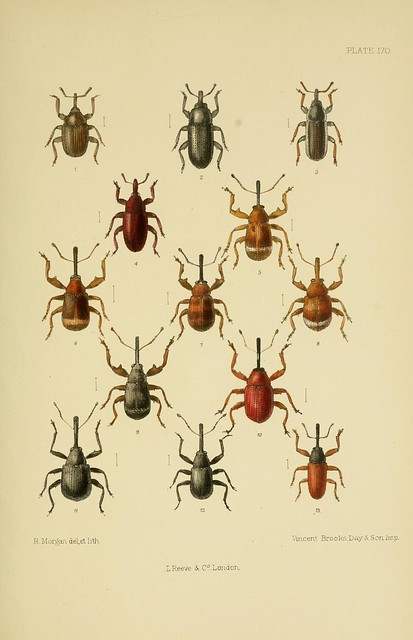 The Coleoptera of the British islands : a descriptive account of the families, genera, and species indigenous to Great Britain and Ireland, with notes as to localities, habitats, etc. v.5 (1891)