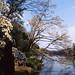 池端の花々