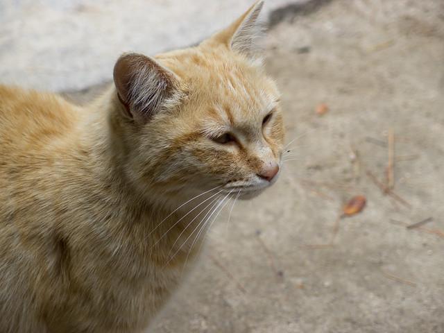 ネコさん@尾道