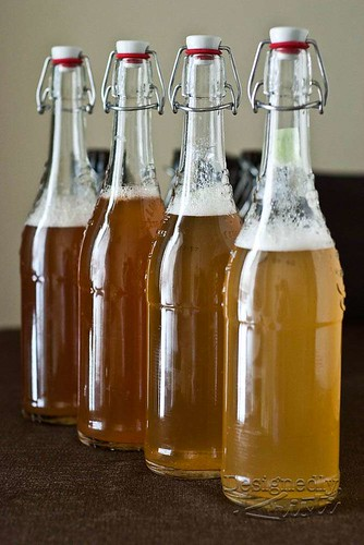 All Four Types of Kombucha Ready to Bottle Condition