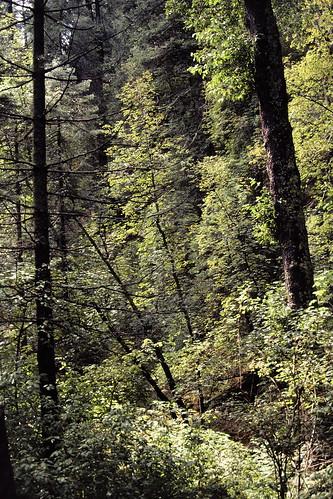 marshallgulch skyislands mountlemmon santacatalinamountains santacatalinas nature arizona olympusom1 kodachrome riparian riparianzone riparianarea riparianhabitat