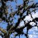 Epiphytic Bromeliads in trees - bromelias en árboles; entre Santa María Temaxcalapan y Villa Alta, Región Sierra Juárez, Oaxaca, Mexico por Lon&Queta