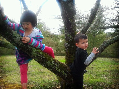 Tree monkeys
