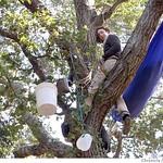 柏克萊的抱樹行動歷時4年,最後仍不敵校方開發壓力。(照片節錄自舊金山紀事報)