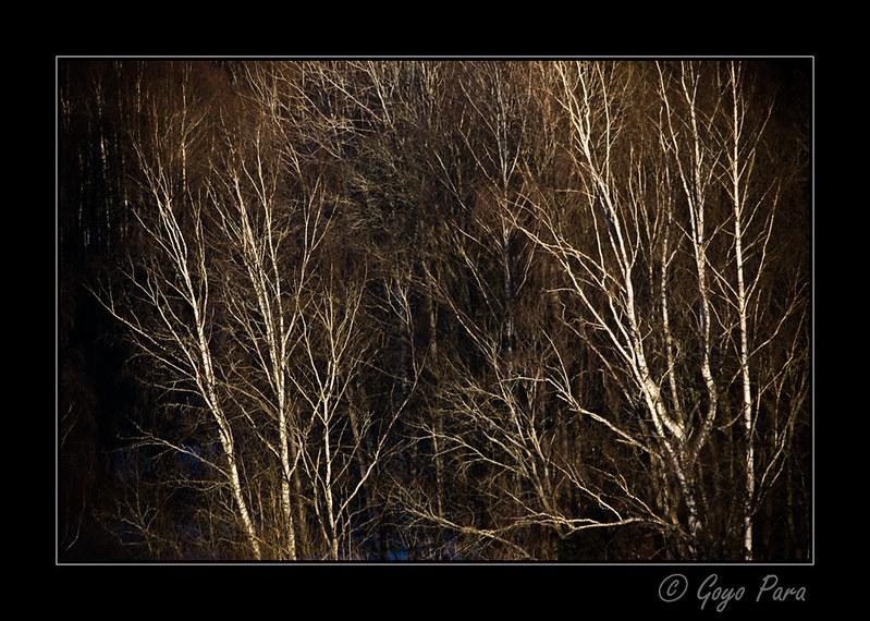 La profundidad del bosque