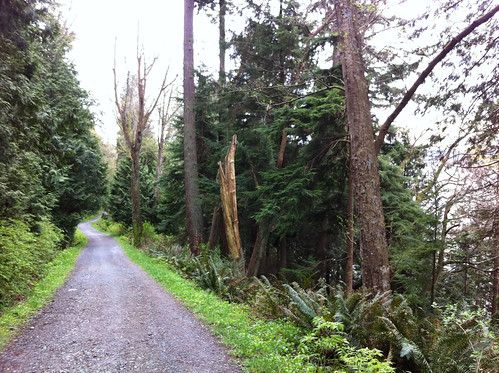 Typical trail in Stanley Park, wide and well maintained