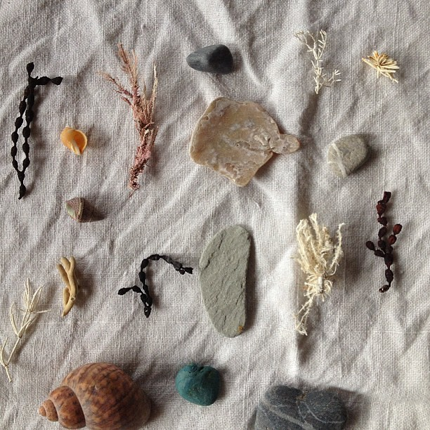 beach treasure