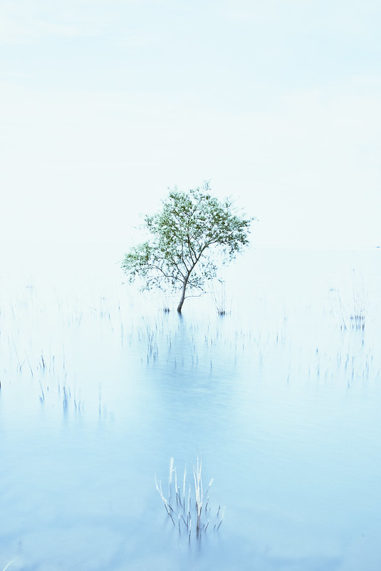 a Small tree on the Lake *