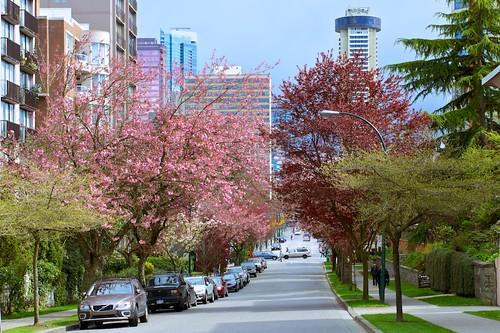 Today in Vancouver: Buildings and Blossoms