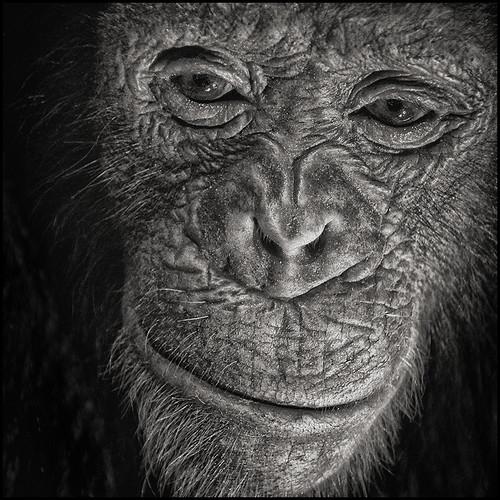 ape by andrè t.