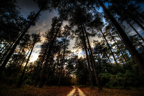 park trees forest path wideangle blakeleystatepark sitenature nikond800
