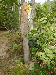 DSCN1448 94 Rolling Ridge Foundation Boundary