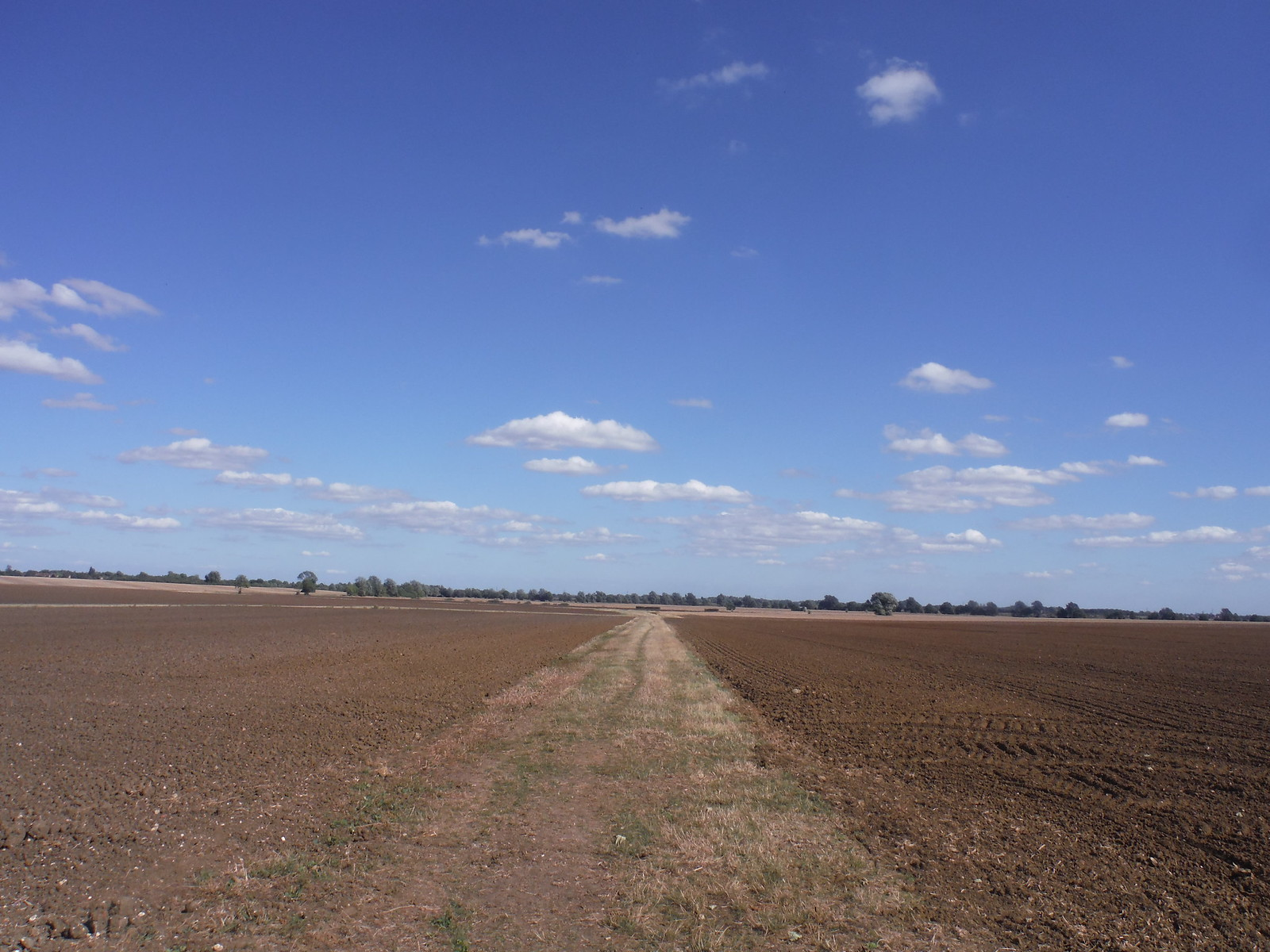 Big Skies in Fenland, w/o Ely Cathedral SWC Walk 118 Ely Circular