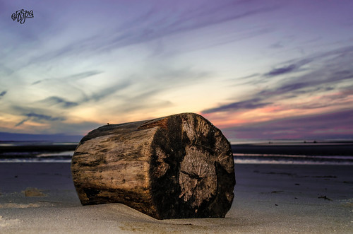 A Lone Log at Dusk by eHopePhotography
