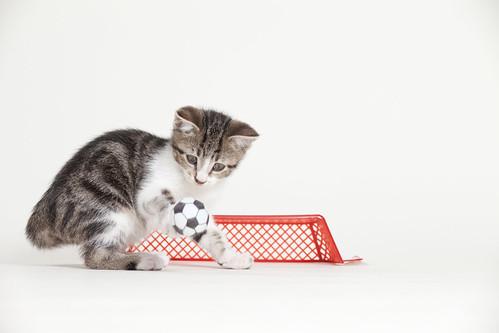 [フリー画像素材] 動物 (哺乳類), 猫・ネコ, 子猫・小猫, サッカー ID:201302181000