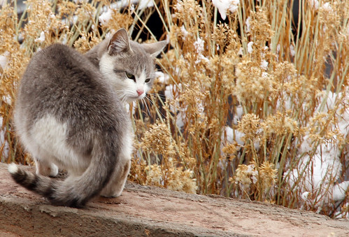 La Posada - Delicate Cat