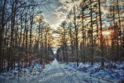 winter snow tree forest germany landscape sundown pentax path elm hdr luminance lowersaxony k200d reitlingstal