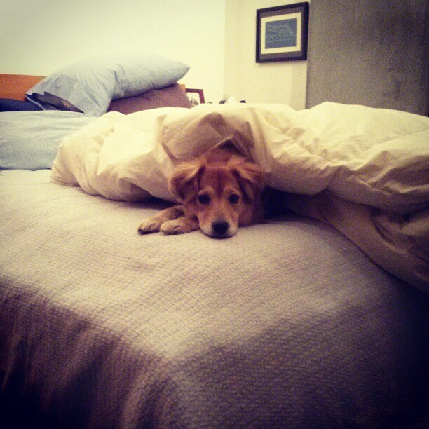 I made the bed.