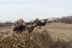 Our Guns: Goose hunting