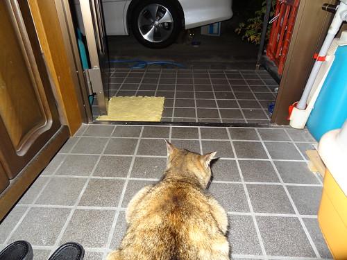 第6の猫現る