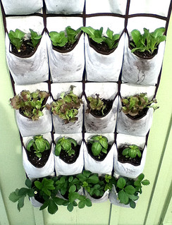 Vertical Garden in Shoe Pockets