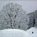 Fresh snowfall ... by ruschi_e