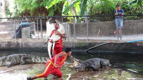 Koh Samui Crocodile Farm サムイ島 クロコダイルファーム (10)