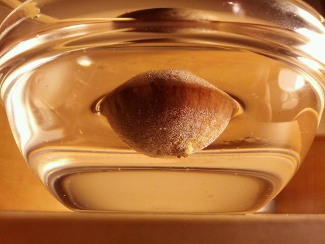 avacado seed